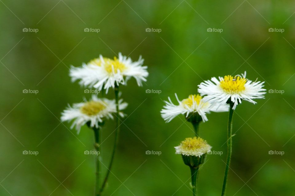 Flowers growing at outdoors