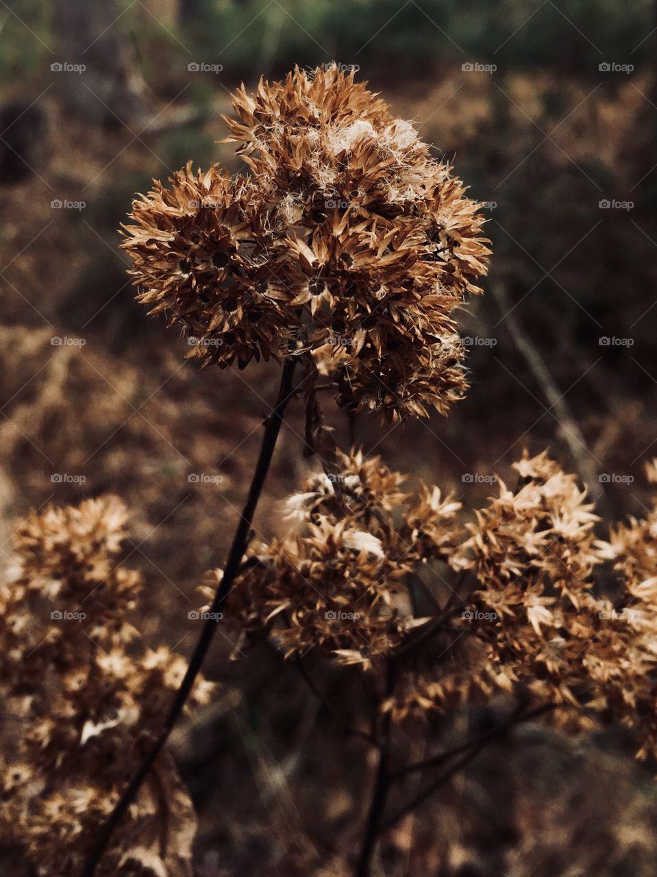 Senesced weeds in winter's forest