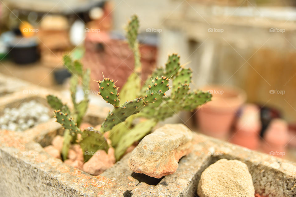 Close-up of cactus plant on rock