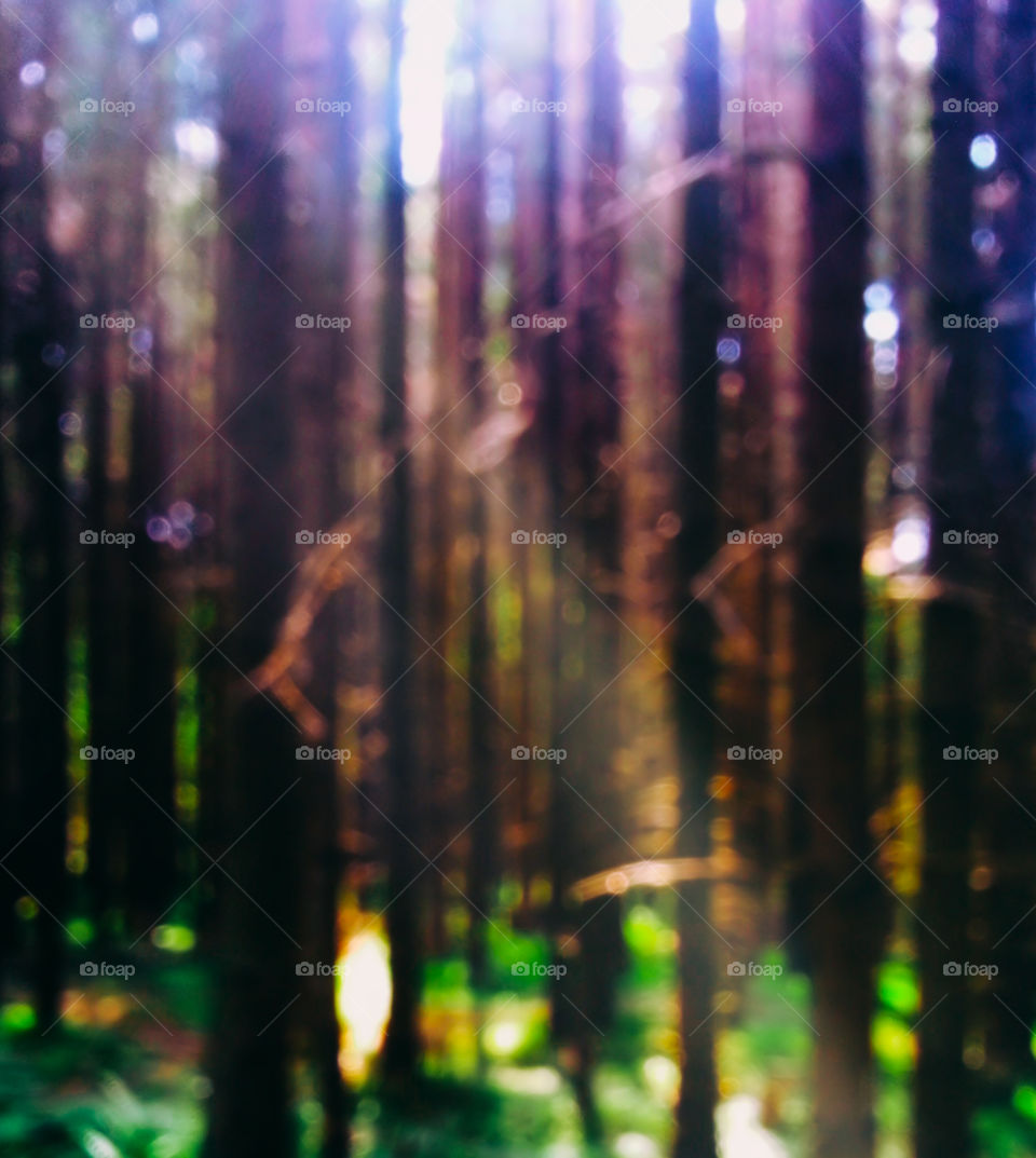 Dramatic forest bokeh