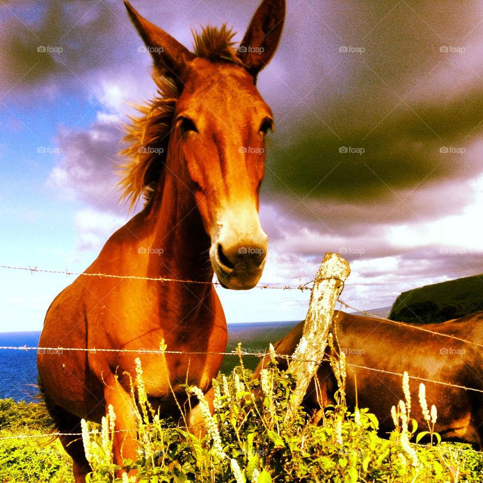 sky italy sun donkey by crabople