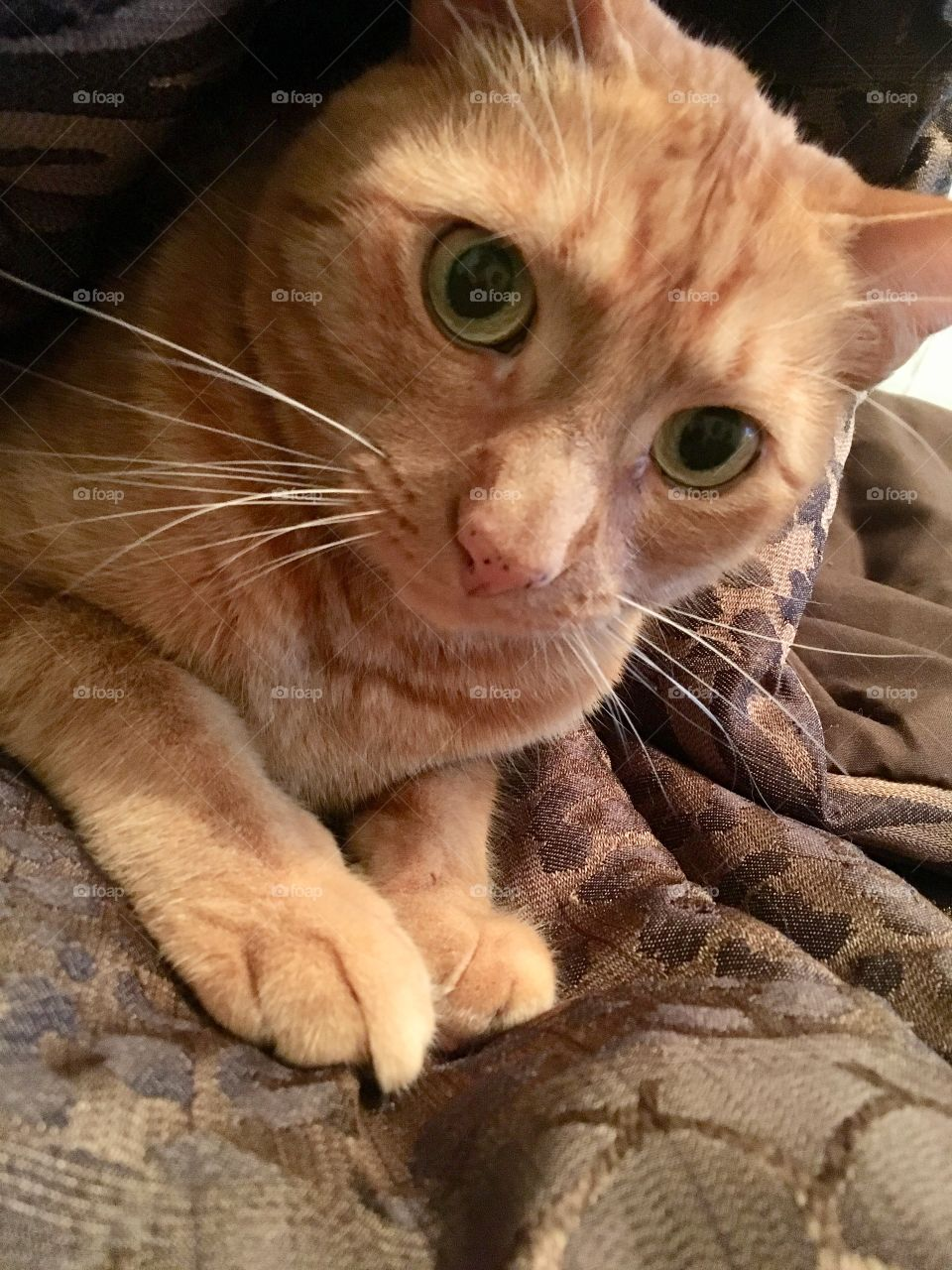 Ginger kitty snuggled up in blankets
