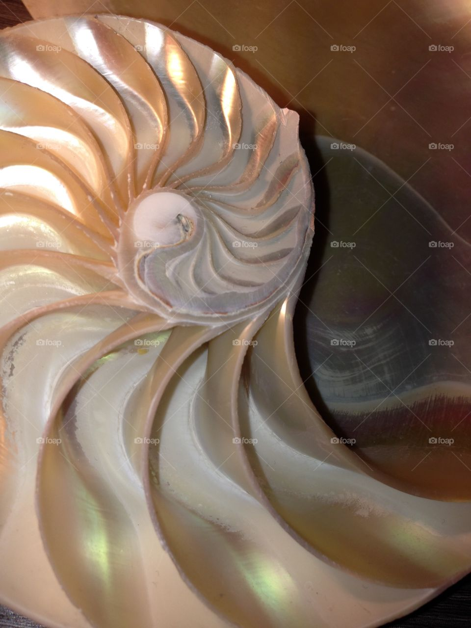Nautilus shell cross section spiral symmetry