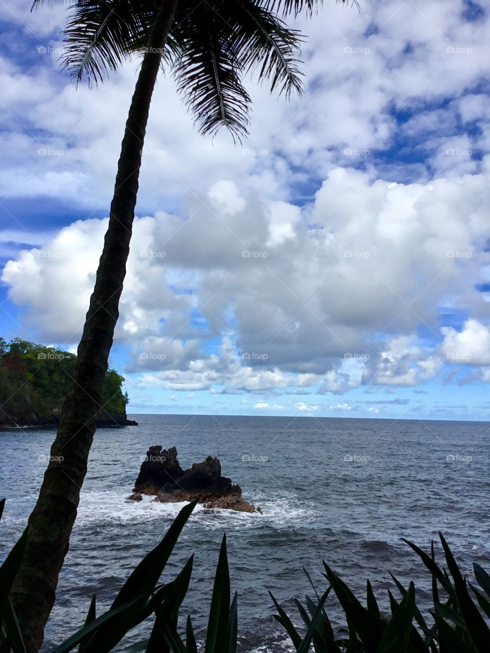 Ocean view at Hawaii Tropical Botanical Garden
