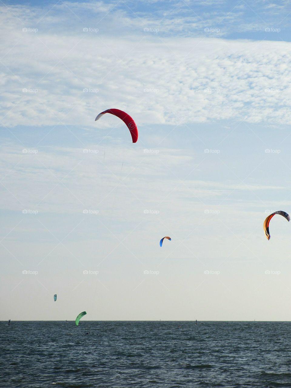 Kites urging on Tampa Bay, Florida