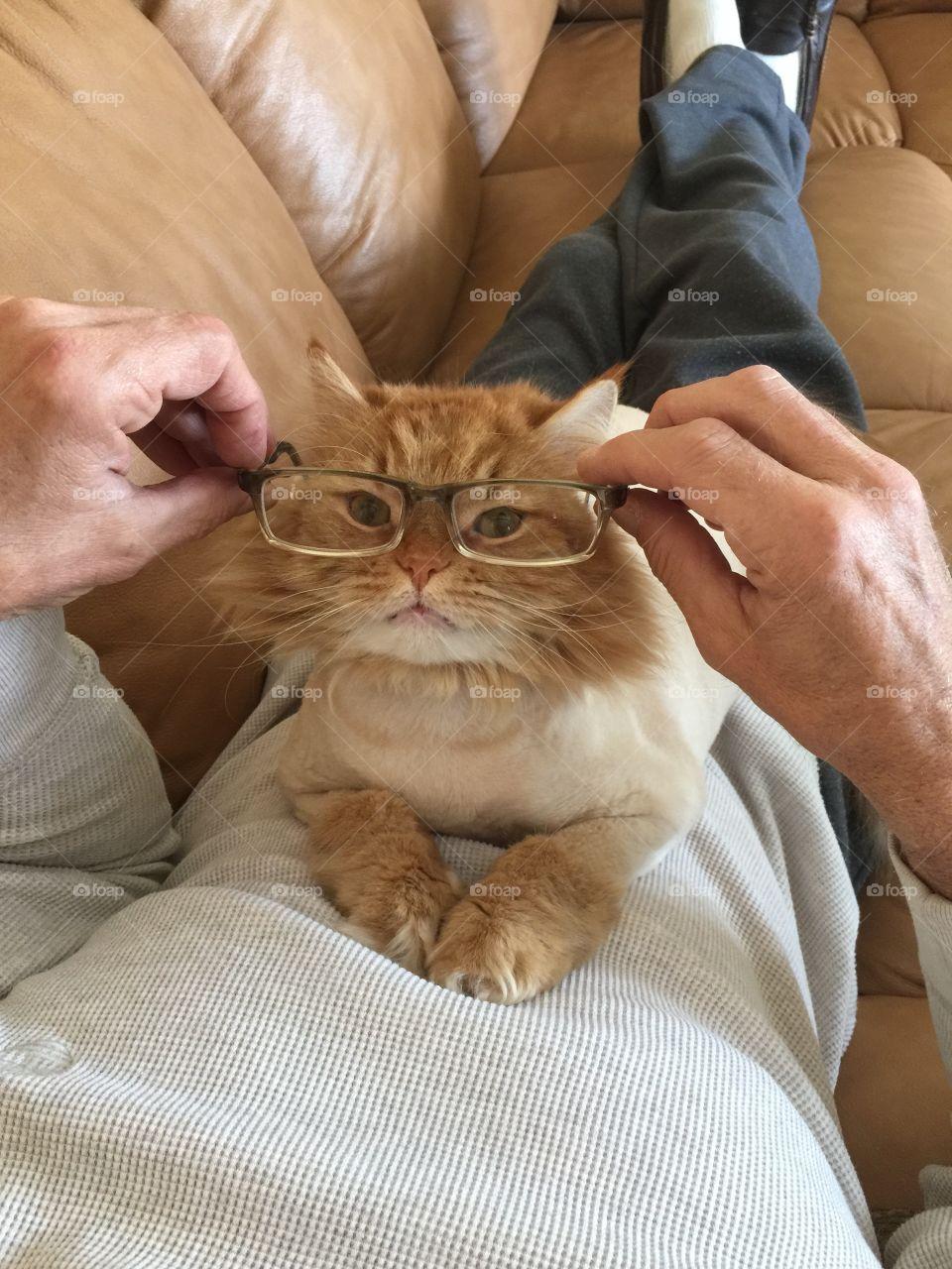 Cat sitting on man's body