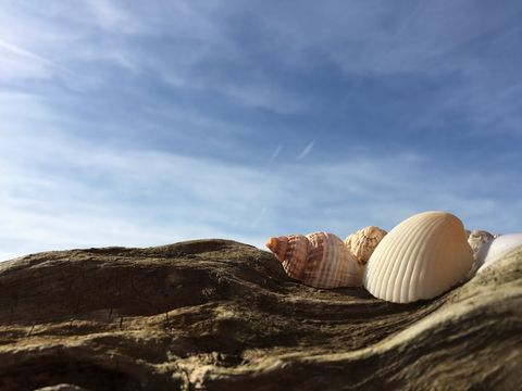 Seashells on driftwood