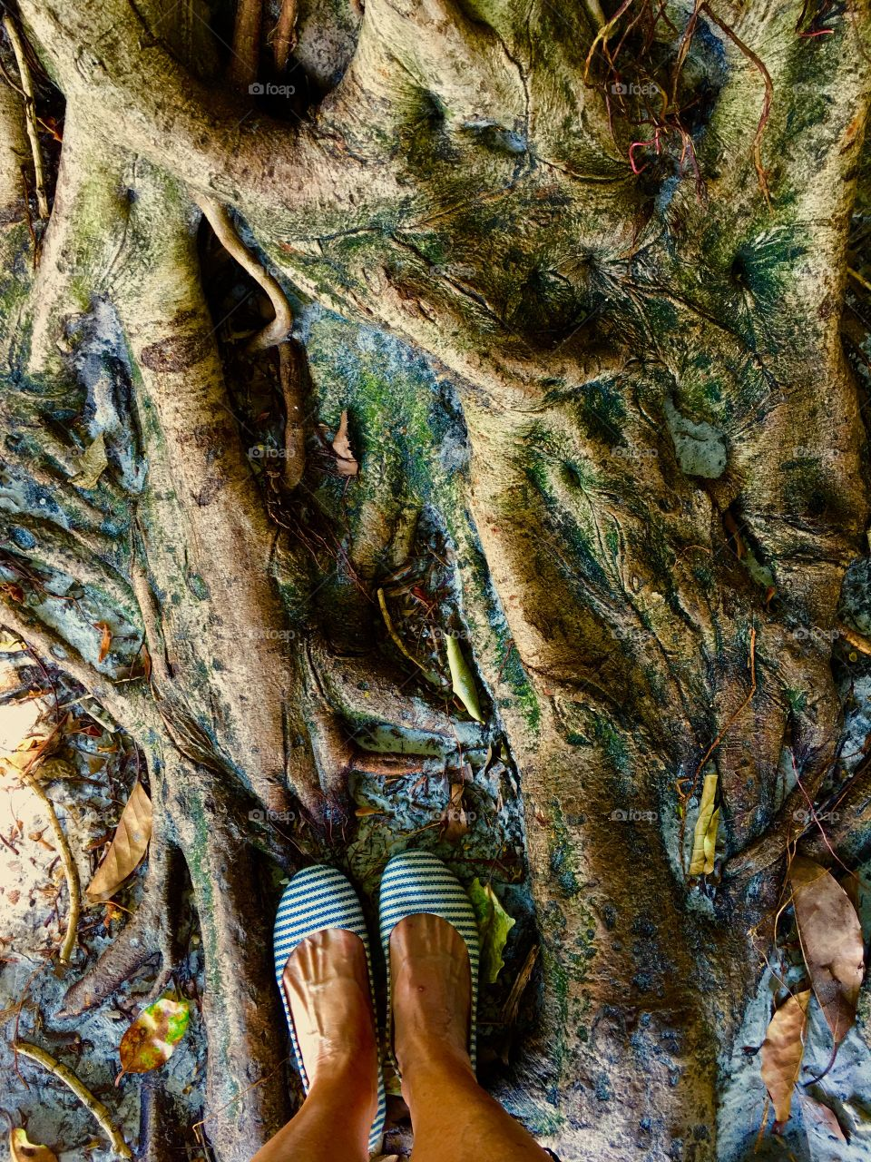Tree roots and feet