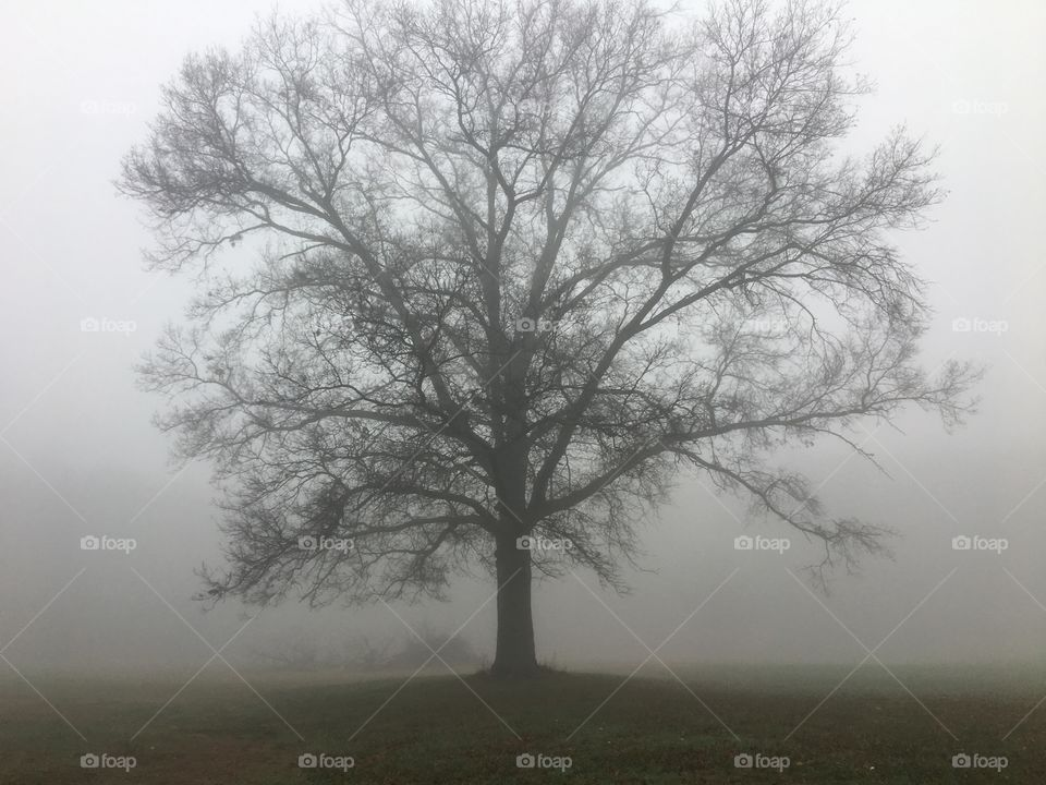 Fog surrounding the lonely tree