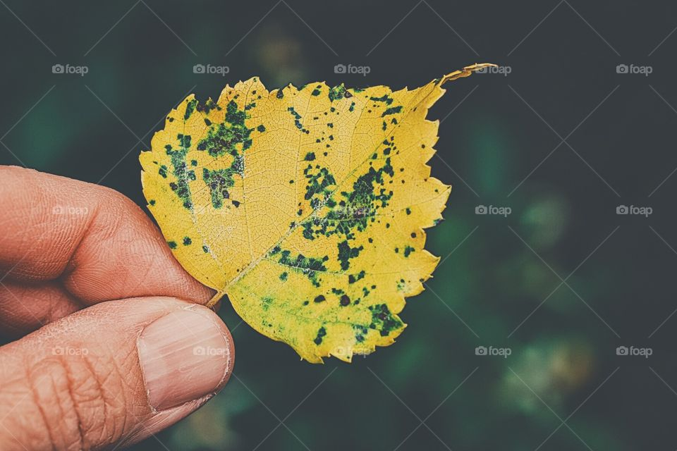 Hand Holding Autumn Leaf, Yellow Leaf In Hand, Autumn In New York, Leaves Changing Color, Leaf From Tree, Fall Time Exploration, First Signs Of Autumn