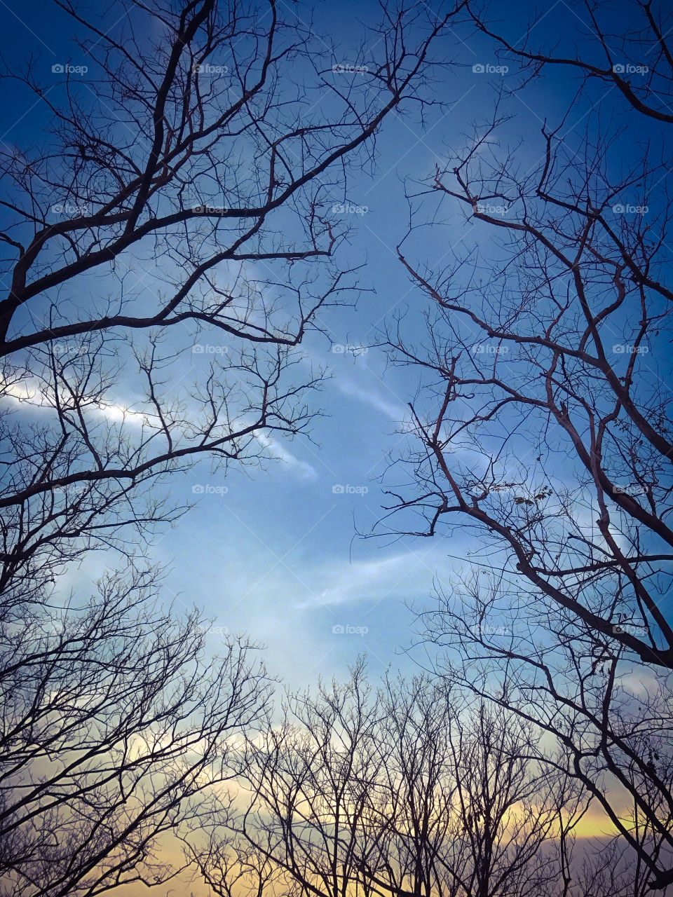 Leafless branches of trees in fall season with sky and cloud background