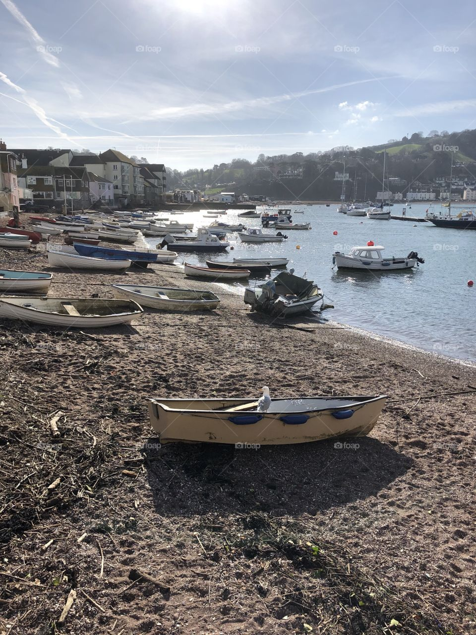 What a view the single swan has, a glorious late winters day in Teignmouth, Devon today Feb 2019