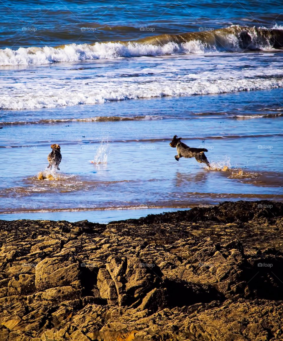 Two dog playing in sea