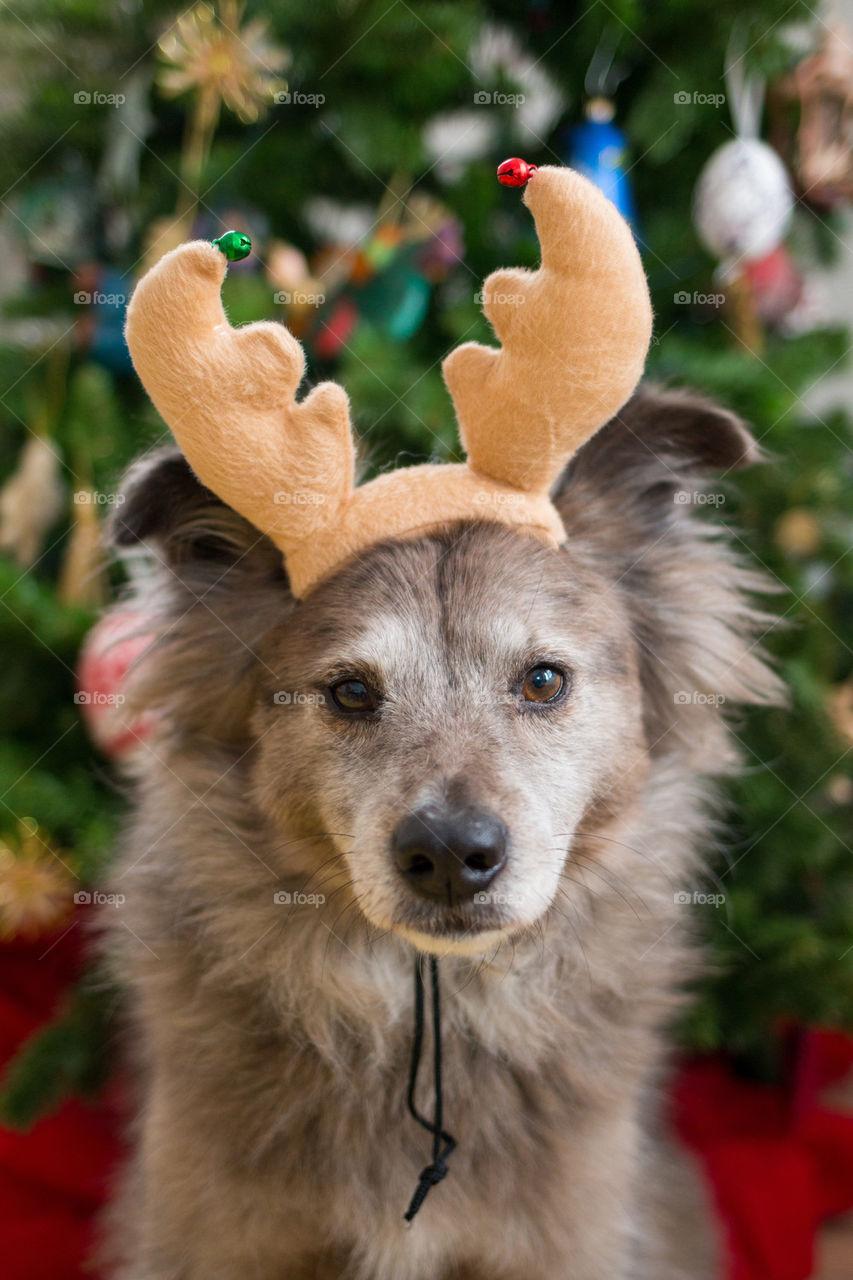 Reindeer doggy