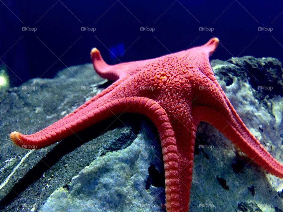 Red starfish on rock in underwater