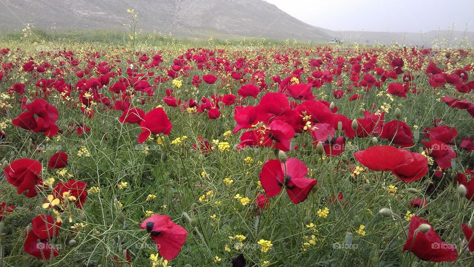 View of flower field