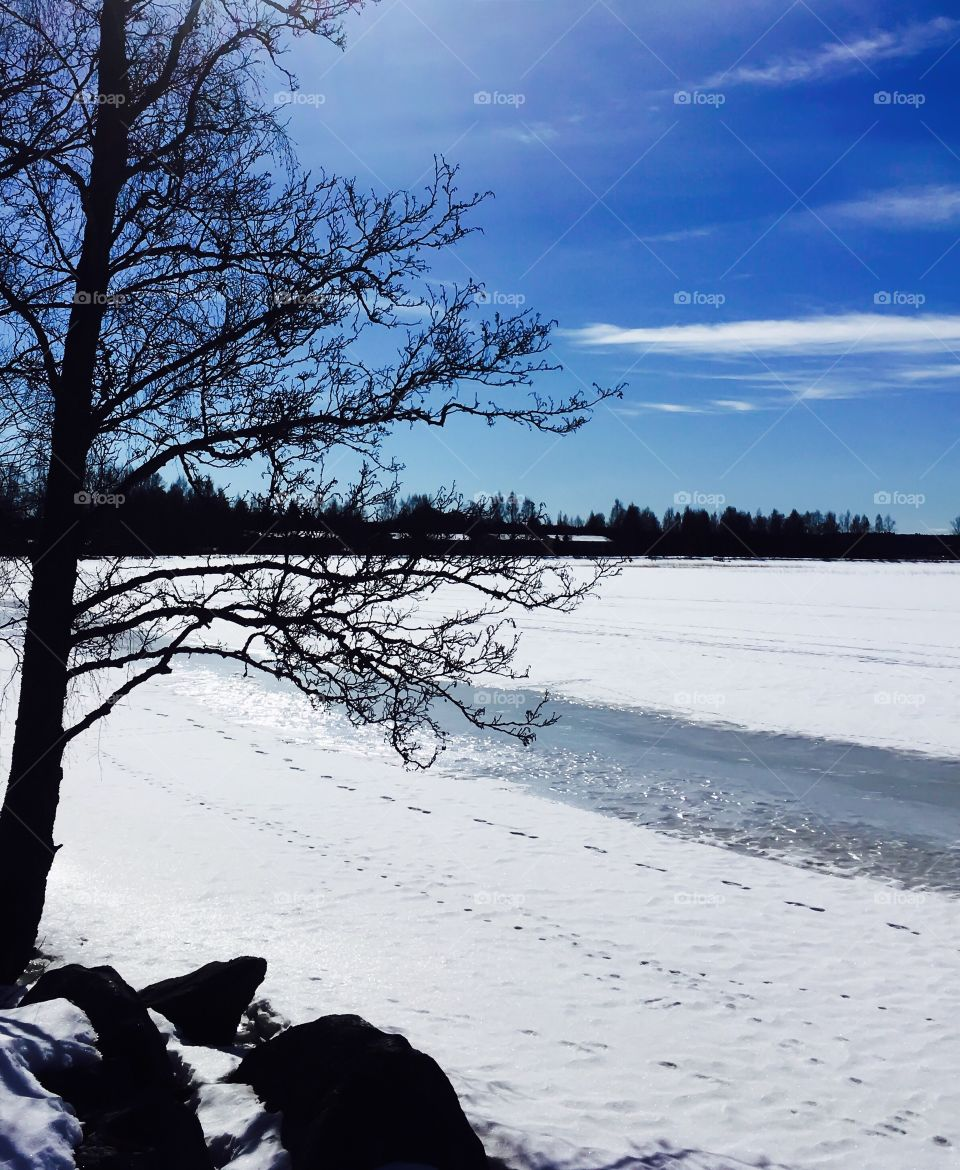 Winter coastline. Footsteps on the snow. Beautiful blue sky and white snowy lake.