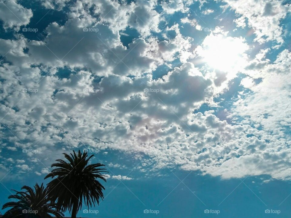 California Palm trees puffy clouds and sunshine