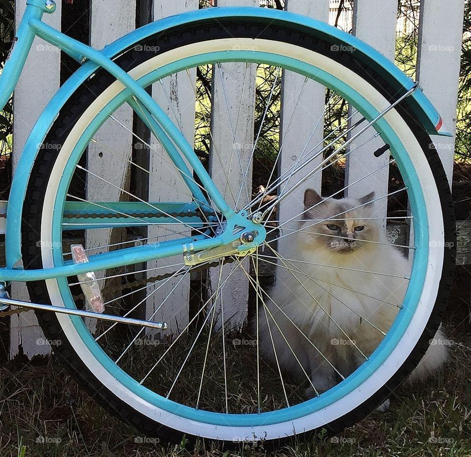 Cat  behind a bicycle wheel