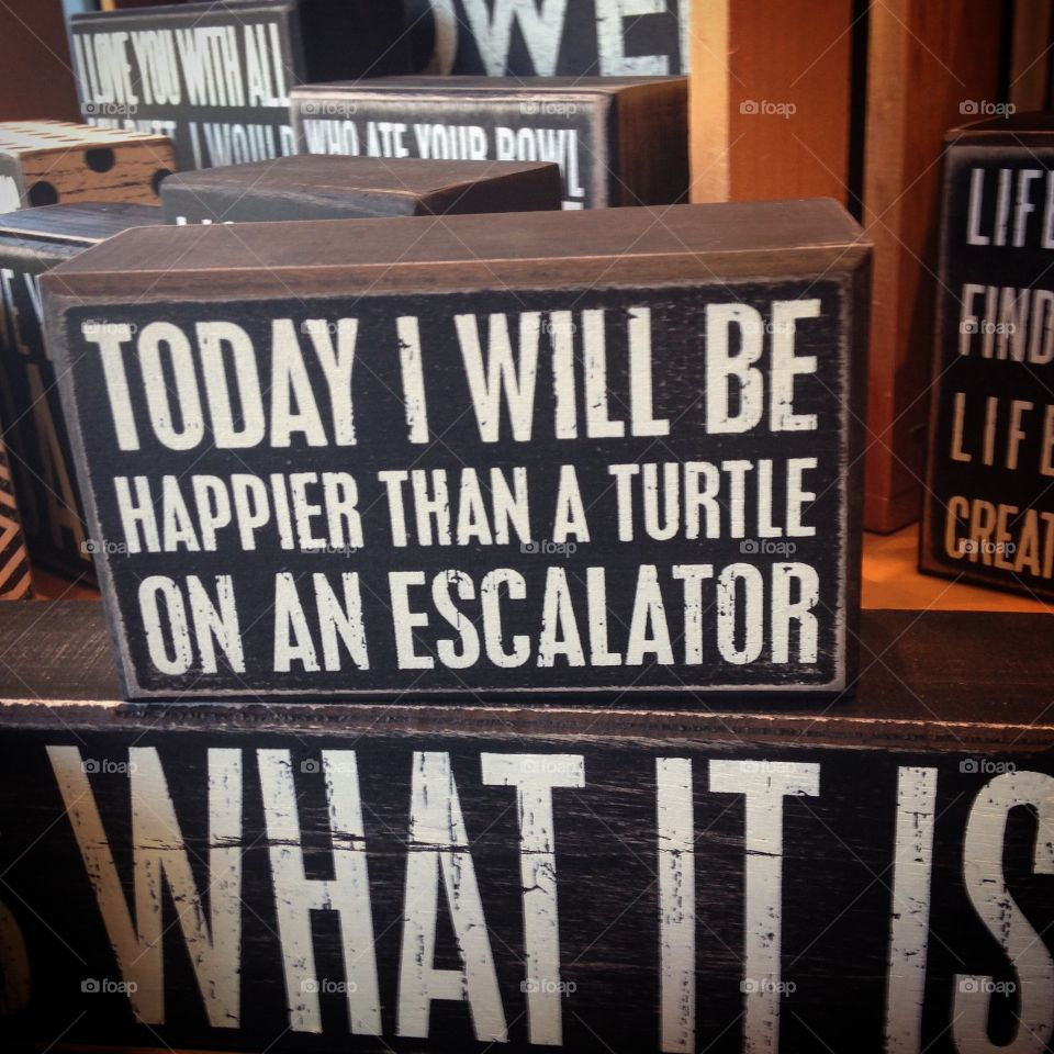 Today I will be happier than a turtle on an elevator