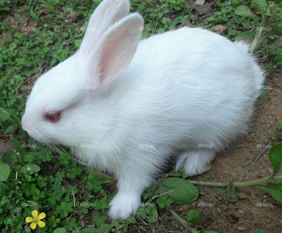 bunny in wilderness