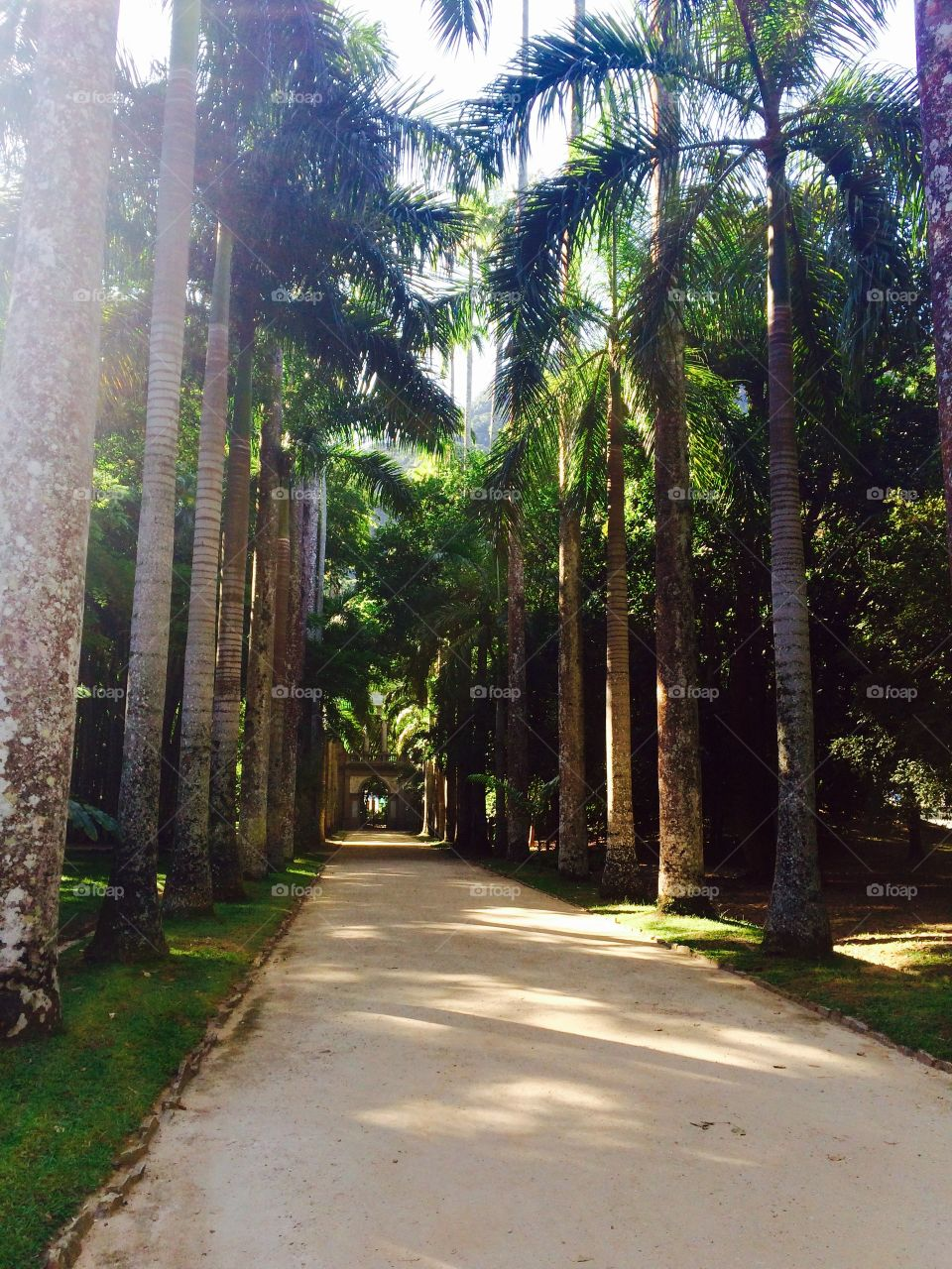Footpath amidst palm tree in park