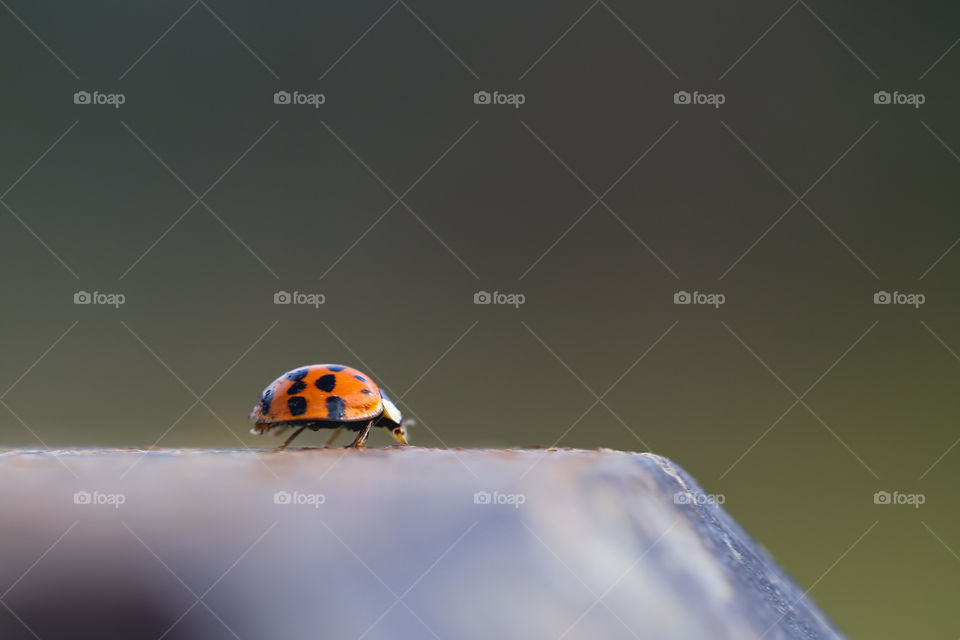 Ladybug on the edge of a fence post