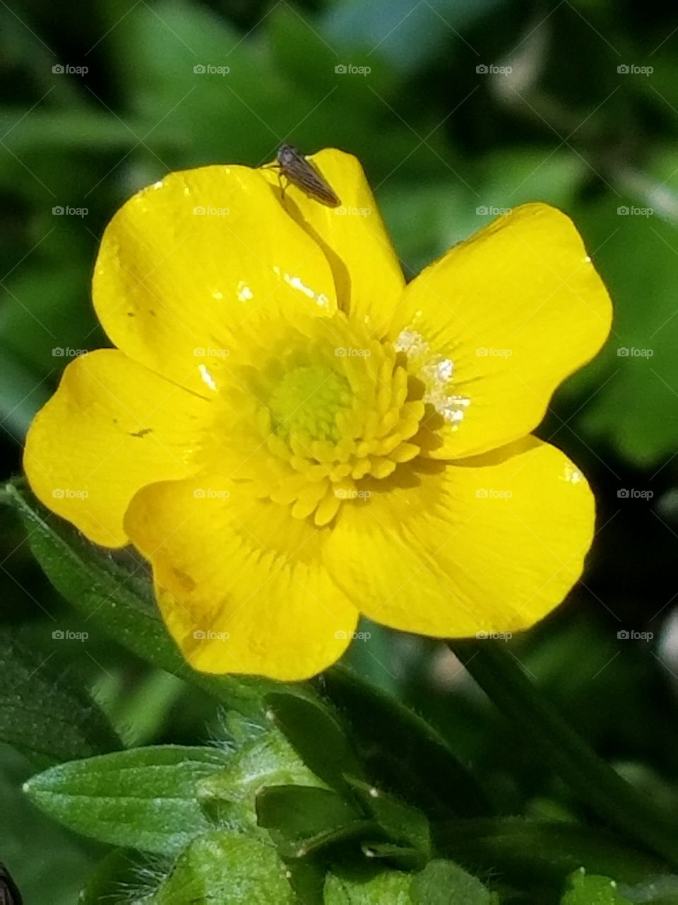 Tiny yellow flowering plant with a tiny insect