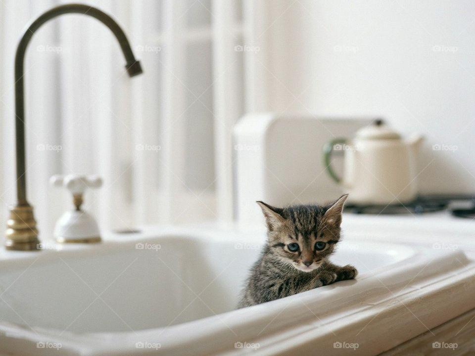 sweet blue eyes my little kitty bathroom by borzuciaq