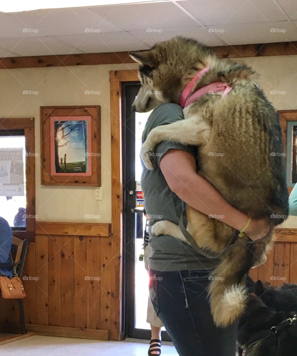 Person carrying dog