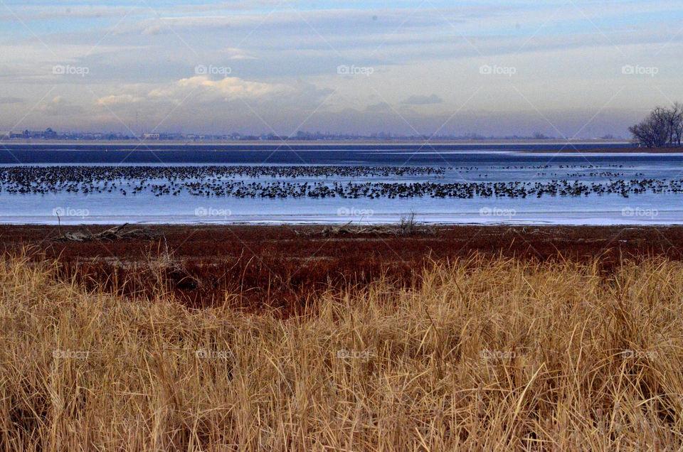 Barr Lake Migration