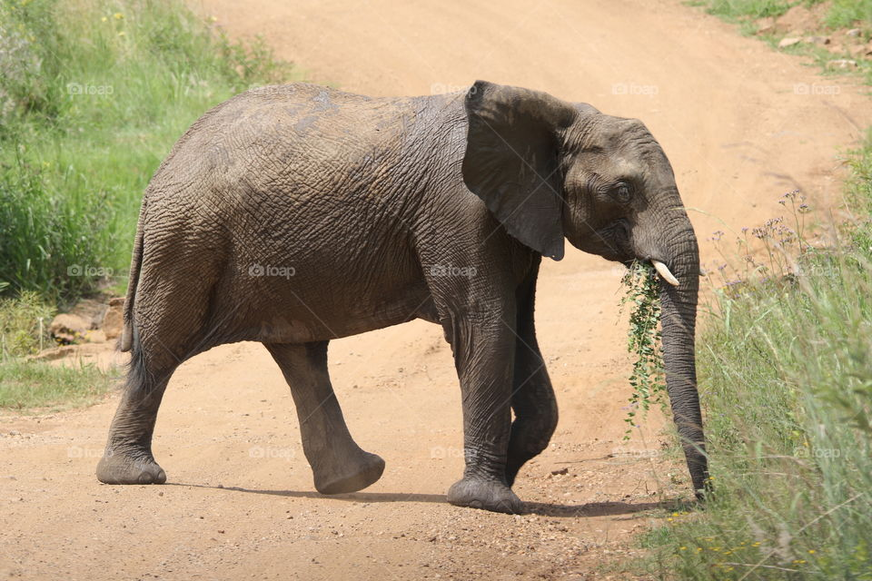 Close-up of elephant walking on dirt road
