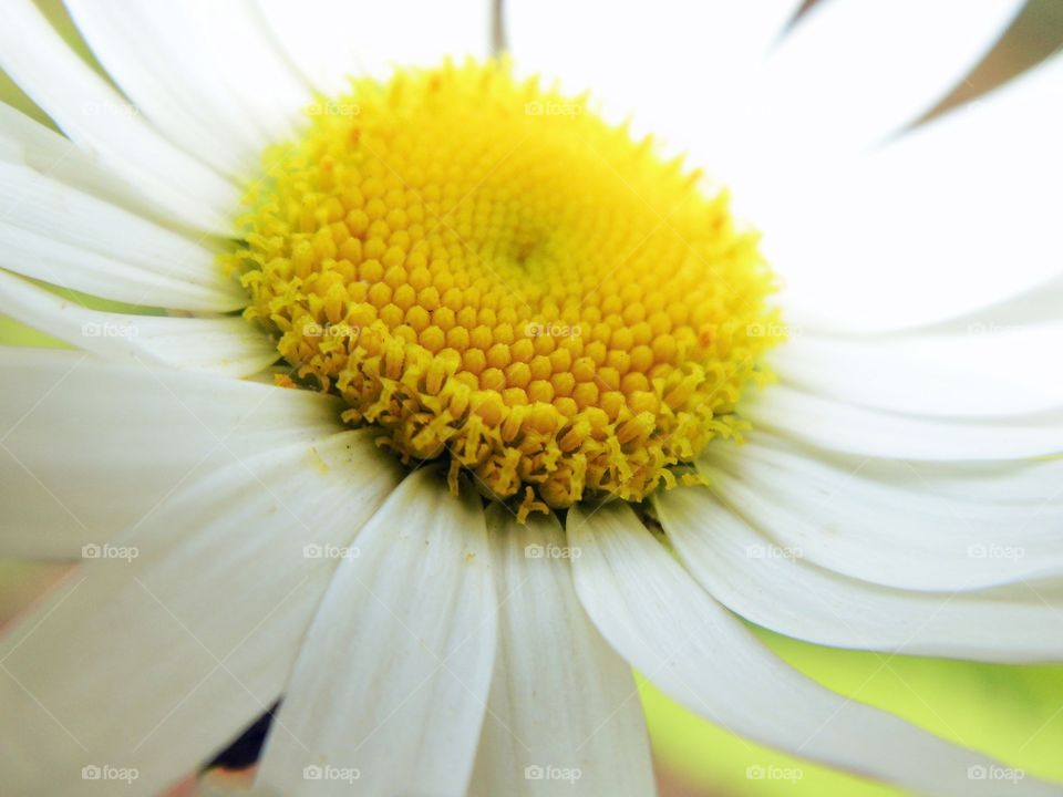 Extreme close-up of a white flower