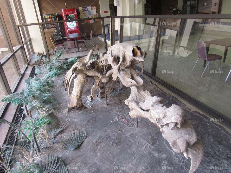 Mega Sloth Skeleton